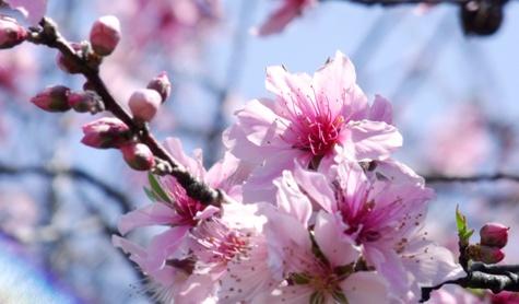 画像ー292 春の息吹2015 016-2