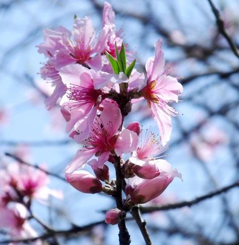 画像ー292 春の息吹2015 010-2