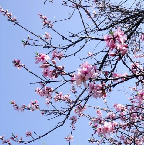 画像ー292 春の息吹2015 011-2