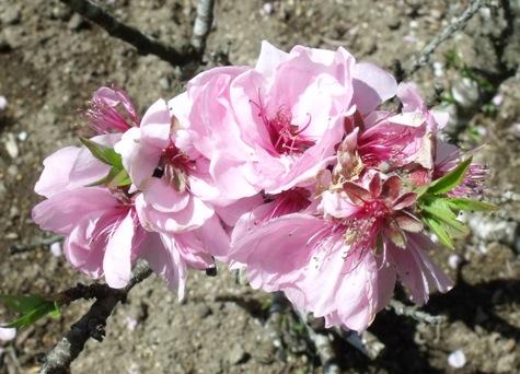 画像ー292 春の息吹2015 022-2