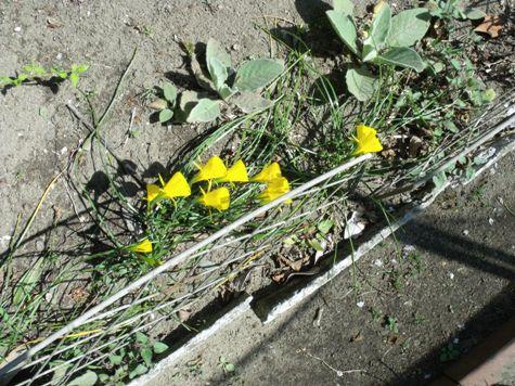 画像ー292 春の息吹2015 058-2