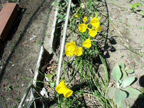 画像ー292 春の息吹2015 059-2