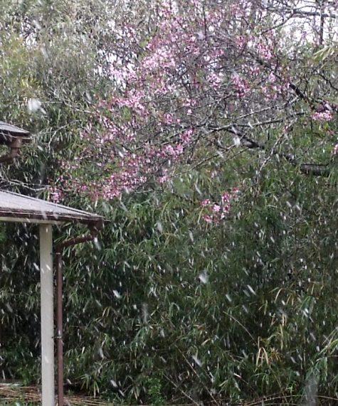 画像ー295 2015年度の初雪と地震 001-5