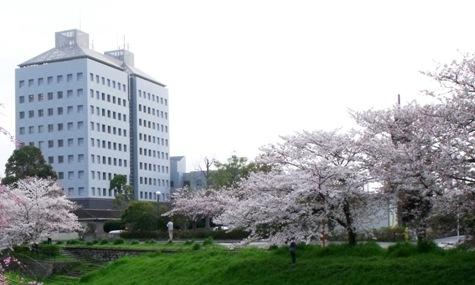 画像ー295 2015年茂原の桜・豊田川 073-4