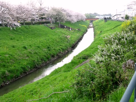 画像ー295 2015年茂原の桜・豊田川 028-2