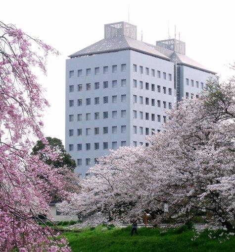 画像ー295 2015年茂原の桜・豊田川 071-3