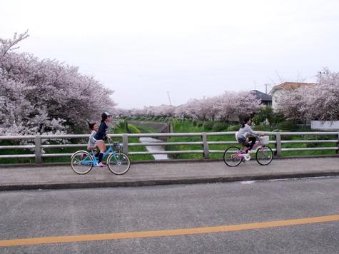 画像ー295 2015年茂原の桜・豊田川 163-2