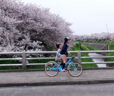 画像ー295 2015年茂原の桜・豊田川 163-3