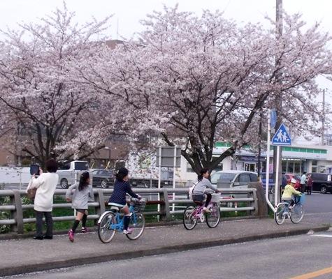 画像ー295 2015年茂原の桜・豊田川 164-3