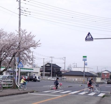 画像ー295 2015年茂原の桜・豊田川 164-5