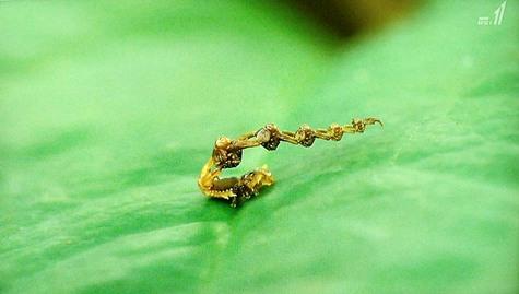 画像ー297 面白昆虫と山岳地帯料理 085-2