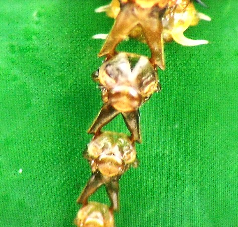 画像ー297 面白昆虫と山岳地帯料理 092-2