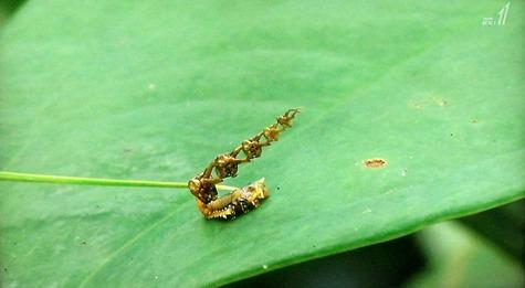 画像ー297 面白昆虫と山岳地帯料理 094-2