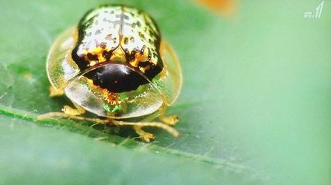 画像ー297 面白昆虫と山岳地帯料理 005-2