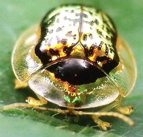画像ー297 面白昆虫と山岳地帯料理 005-3