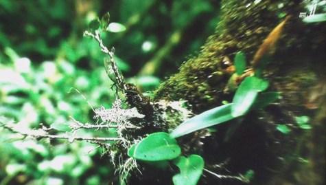 画像ー297 面白昆虫と山岳地帯料理 011-2