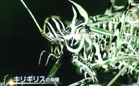 画像ー297 面白昆虫と山岳地帯料理 013-2