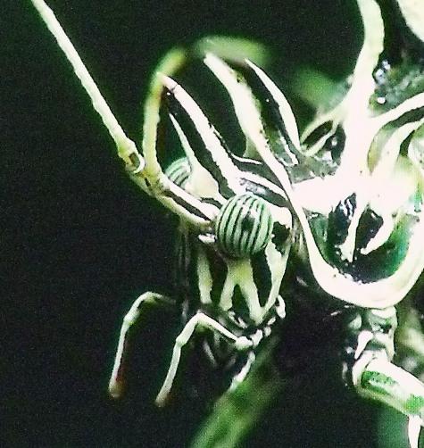 画像ー297 面白昆虫と山岳地帯料理 013-3