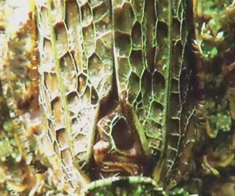 画像ー297 面白昆虫と山岳地帯料理 018-4
