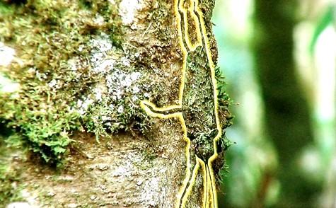 画像ー297 面白昆虫と山岳地帯料理 016-2