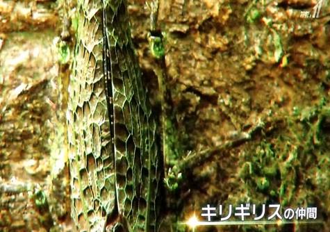 画像ー297 面白昆虫と山岳地帯料理 017-2