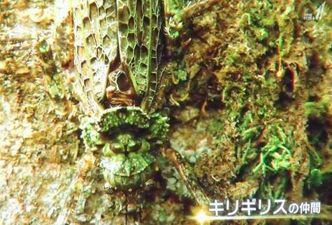 画像ー297 面白昆虫と山岳地帯料理 018-2