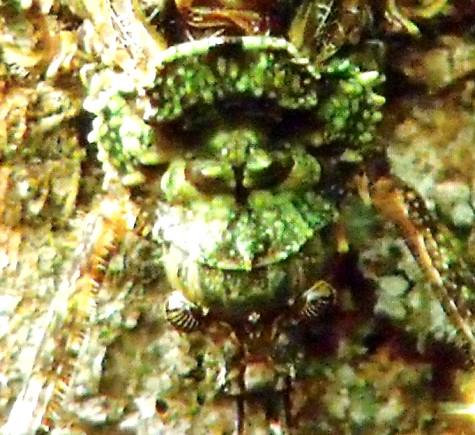 画像ー297 面白昆虫と山岳地帯料理 018-3