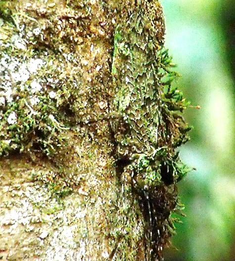 画像ー297 面白昆虫と山岳地帯料理 019-2