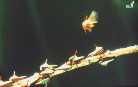 画像ー297 面白昆虫と山岳地帯料理 025-2