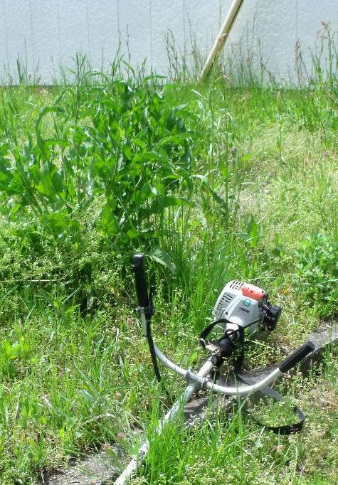 画像ー299 納豆と草刈り機 083-3