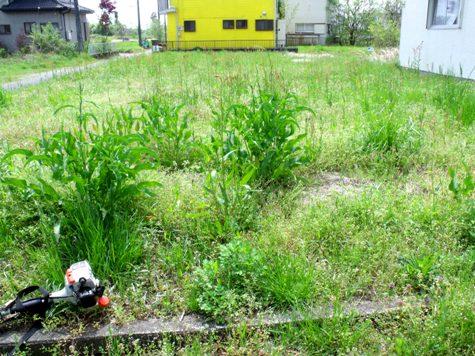 画像ー299 納豆と草刈り機 091-2