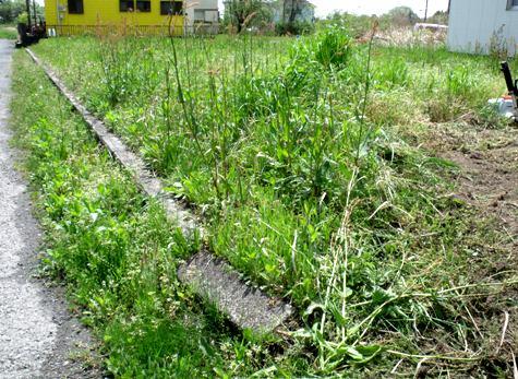 画像ー299 納豆と草刈り機 096-2