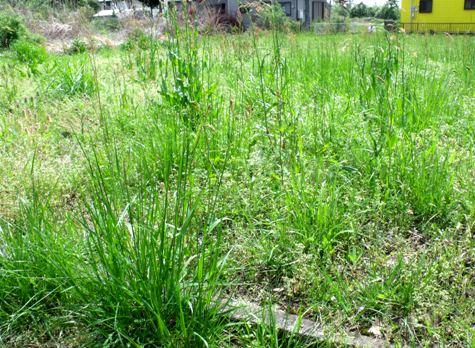 画像ー299 納豆と草刈り機 093-2
