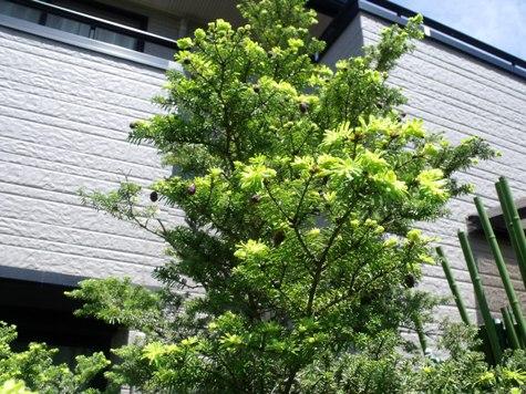 2015 春の小川 046-2