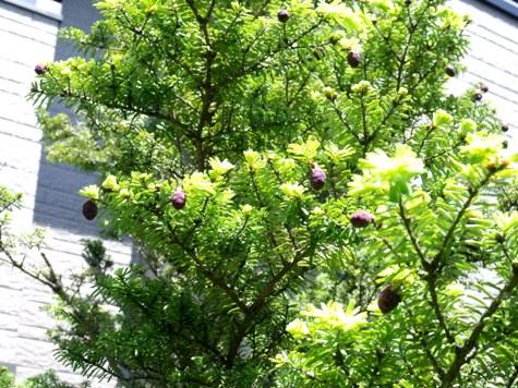 2015 春の小川 047-2