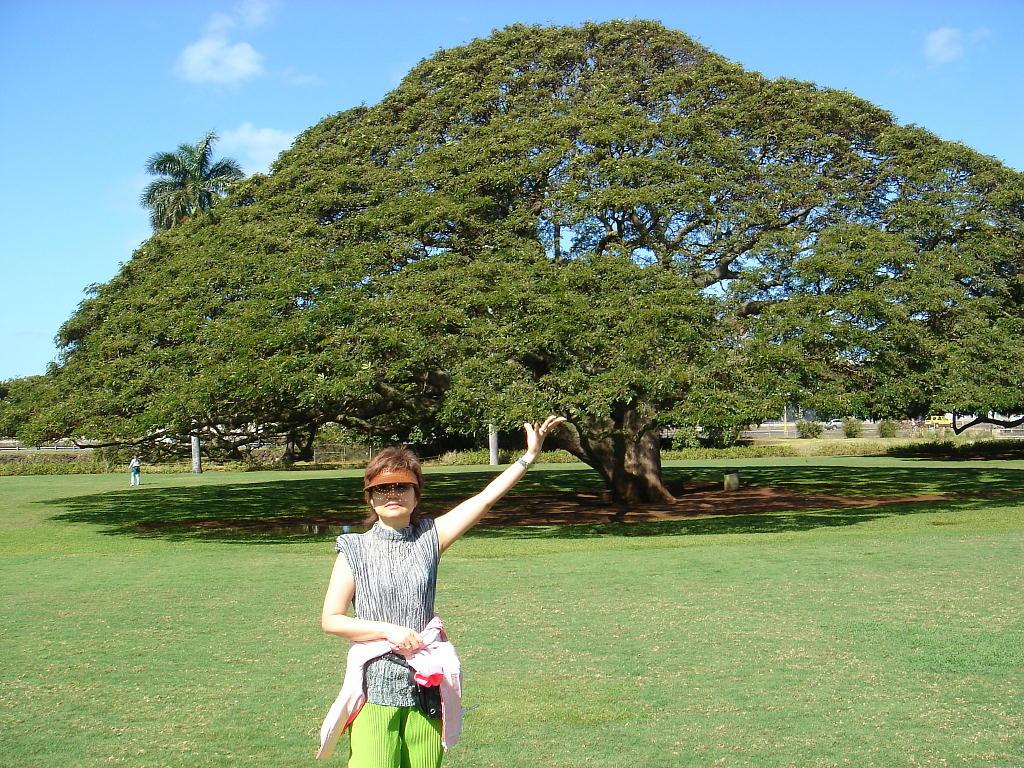 img70この樹何の樹