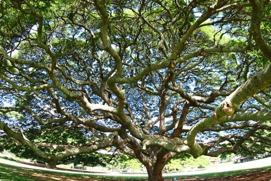 3108875334_81749fa97b_oこの樹