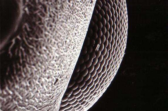 20120910103554f63蟻のSEM
