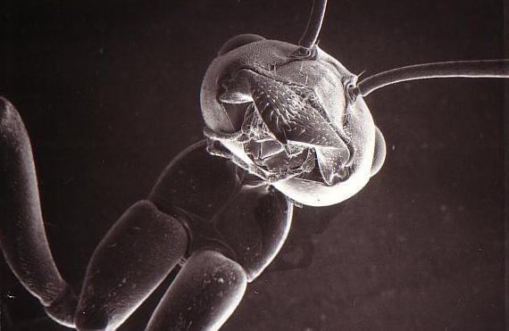 201209101033157b0蟻のSEM