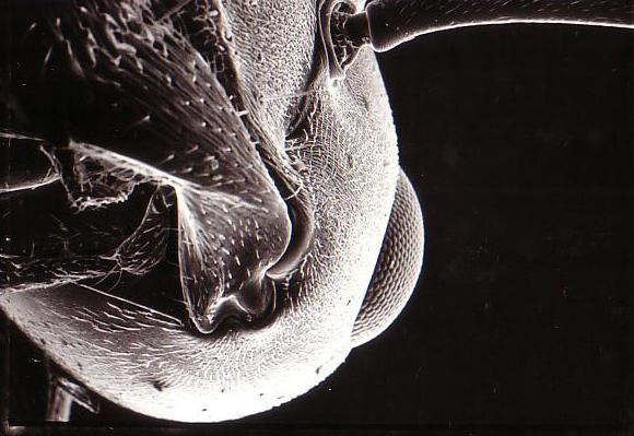 201209101034515c9蟻のSEM