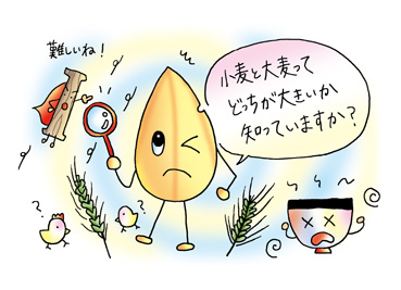 f285_1大麦と小麦