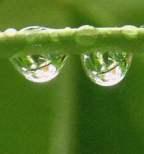 20150602~3日 錦織圭と雨の小川 133-5