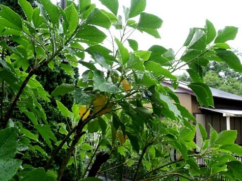 20150602~3日 錦織圭と雨の小川 127-2