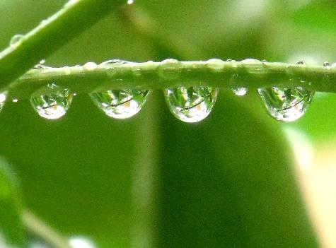20150602~3日 錦織圭と雨の小川 133-4