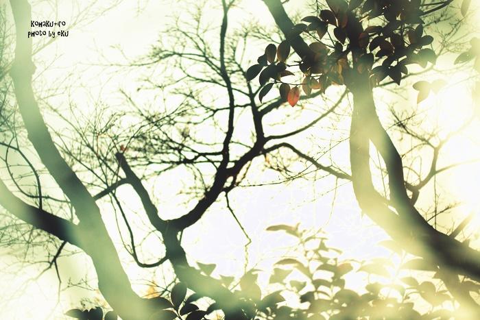 tree108-1.jpg