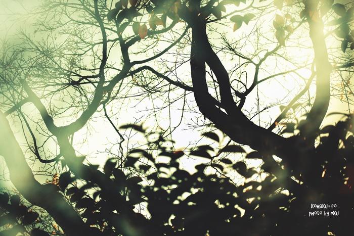tree108-2_20150610230207543.jpg
