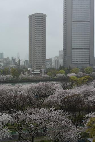 花見201504 (24)