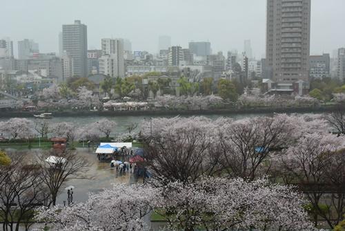 花見201504 (25)