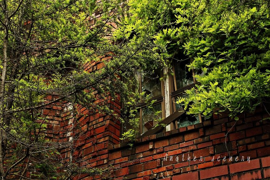 緑と煉瓦と