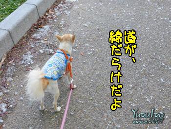 yuruiro20150604_k001